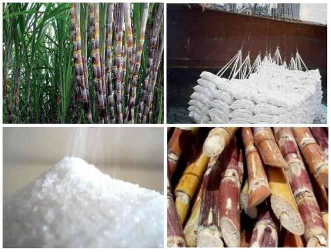 Sử dụng bơm chân không và khí nén trong ngành công nghiệp đường