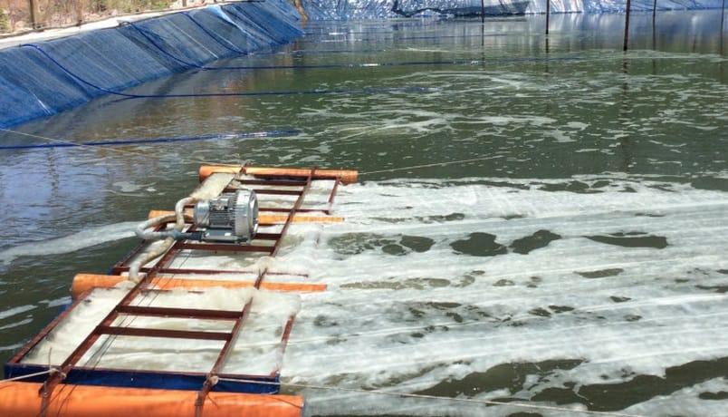 Ứng dụng bơm hút chân không kết hợp máy thổi khí trong sục khí nuôi trồng thủy sản